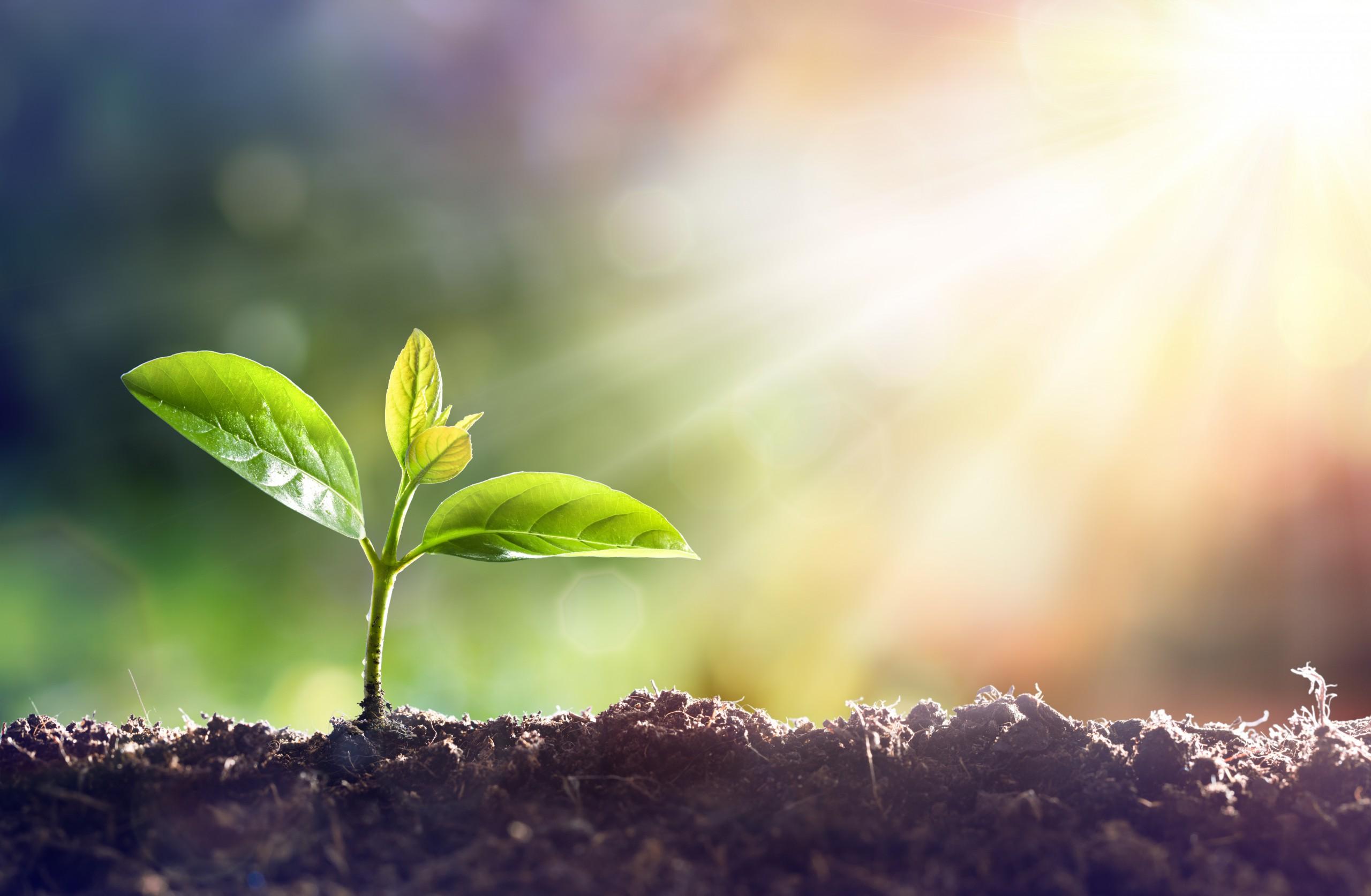 Positionering, groei en business